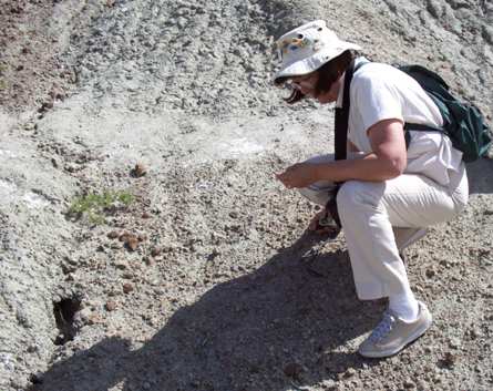 Connecting the past, present and future. Searching for fossilized dinosaur egg shells, Saskatchewan, Canada.